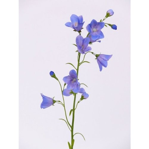 Kunstblume-Glockenblume-Campanula-blau-66-cm-0