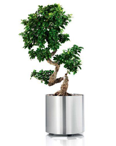 blomus Blumentopf Pflanzkübel Greens Round auf Rollen M, 42,5cm x ...