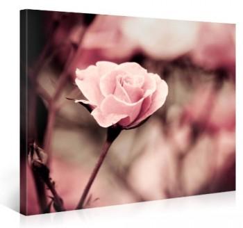 Leinwanddruck-PINK-ROSE-100x75cm-Wanddeko-als-kunstdruck-Leinwandbild-Wandbild-Bilder-fertig-zum-Aufhngen-Leinwandbilder-Vergleichbar-mit-einem-lbild-oder-Gemlde-kein-Poster-oder-Fototapete-e3408-0