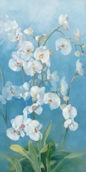 Acrylglasbild-Phalaenopsis-Fontaine-II-von-Sylvie-Vernageau-110-x-220cm-Motiv-bis-an-die-Kanten-Kunstdruck-Poster-hochwertige-Fertigung-Art-Galerie-Shop-0