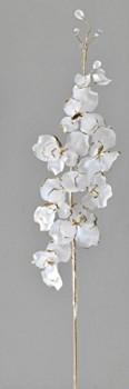 Formano-Orchidee-Orchideenzweig-matt-creme-gold-593924-Orchdieen-Zweig-matt-0