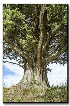 Leinwandbild-XXL-alter-Baum-der-Weisheit-echter-Kunstdruck-120x80-90x60-60x40cm-Gre-80x120cm-0