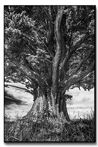 Leinwandbild-XXL-gewaltiger-Baum-Monochrom-echter-Kunstdruck-120x80-90x60-60x40cm-Gre-80x120cm-0