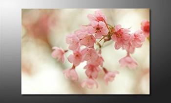 WandbilderXXL-Gedrucktes-Leinwandbild-Cherry-Blossoms-120x80cm-in-6-verschiedenen-Gren-Fertig-gespannt-auf-Holzkeilrahmen-Gnstige-Leinwanddrucke-fr-Kinderzimmer-Schlafzimmer-0