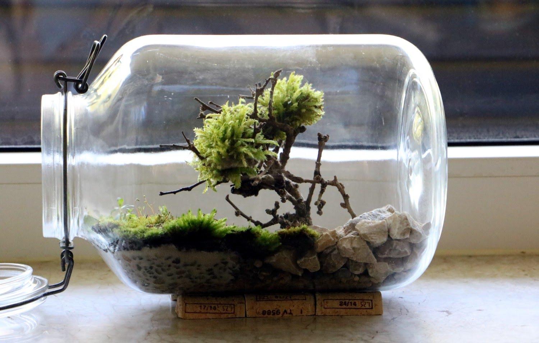 bonsai moosbaum im einmachglas terrarium selber basteln wohnidee by woonio. Black Bedroom Furniture Sets. Home Design Ideas