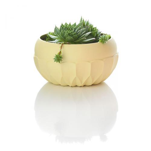 Dschinni Bowl