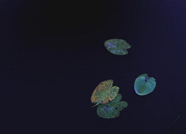 Floating Leinwandbild