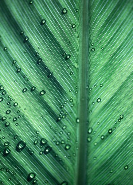 Palm Leaves 11 Leinwandbild