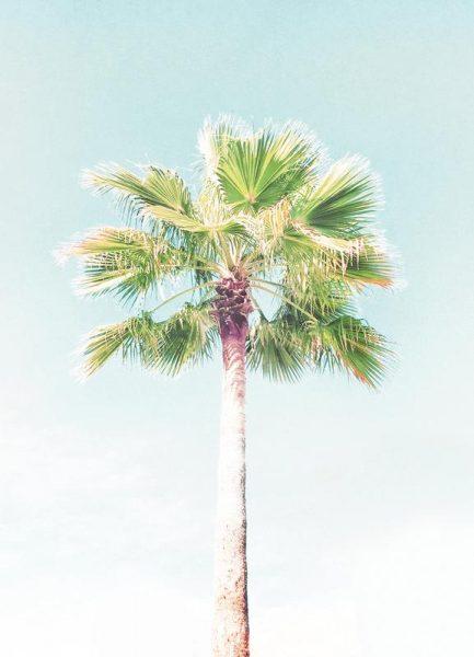 Palme Leinwandbild
