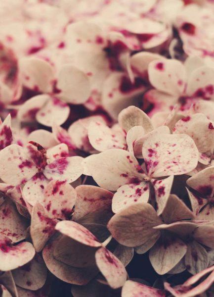 Pink Freckles Leinwandbild