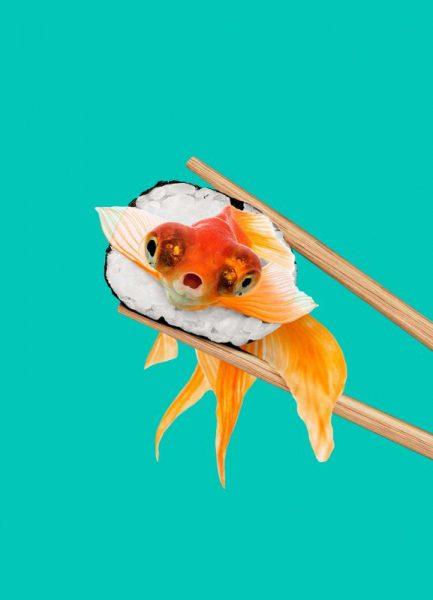 Sushi Goldfish Leinwandbild