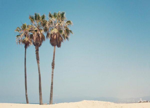 Venice Beach Palms Leinwandbild