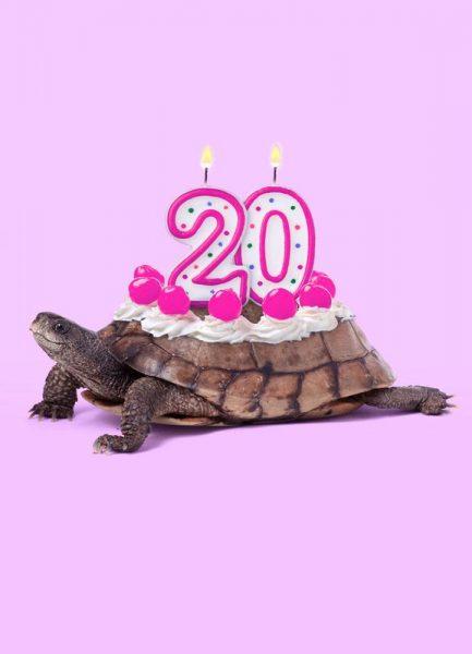 20 Turtle Leinwandbild