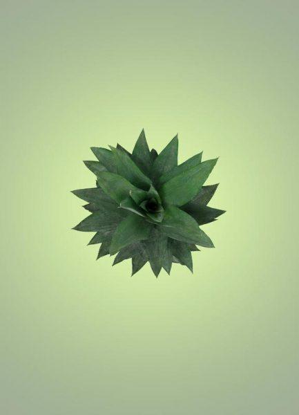 Air Pineapple Leinwandbild