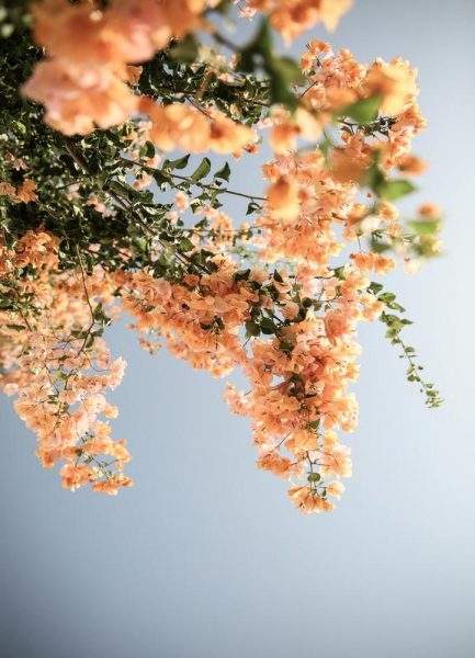 Assos Blooms Leinwandbild