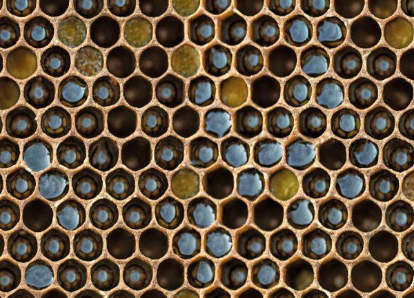 Bee Pattern Leinwandbild