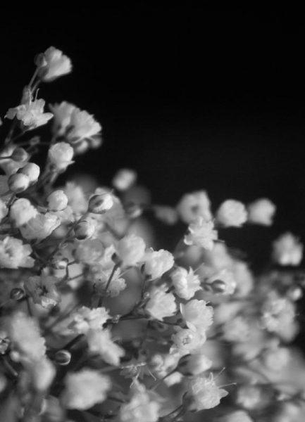 Bloom I Leinwandbild