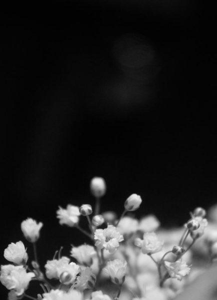 Bloom II Leinwandbild