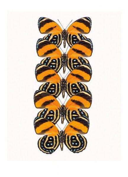 Butterfly Leinwandbild