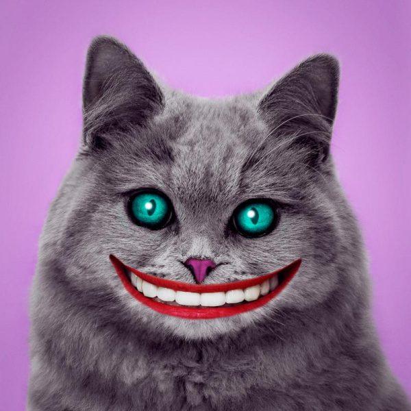 Cheshire Cat Leinwandbild