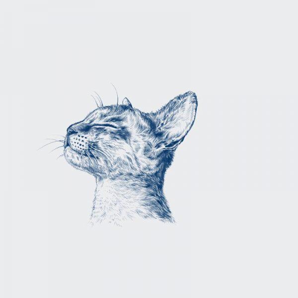 Chiller Cat Leinwandbild