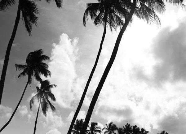 Coco Island 2 Leinwandbild