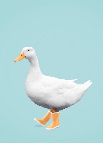 Duck Boots Leinwandbild