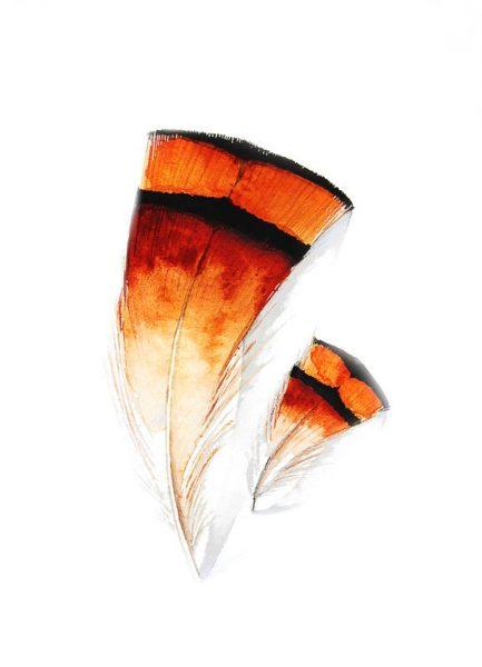 Feathers II Leinwandbild