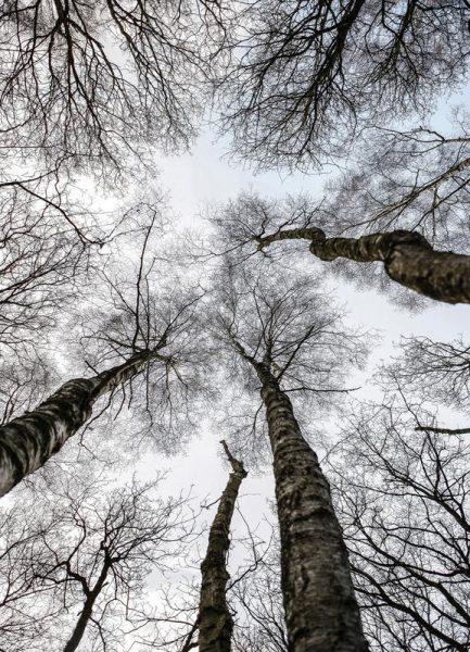 Forest 1 Leinwandbild