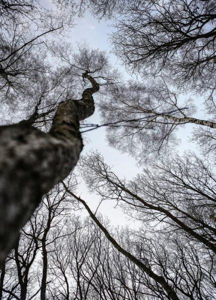 Forest 2 Leinwandbild