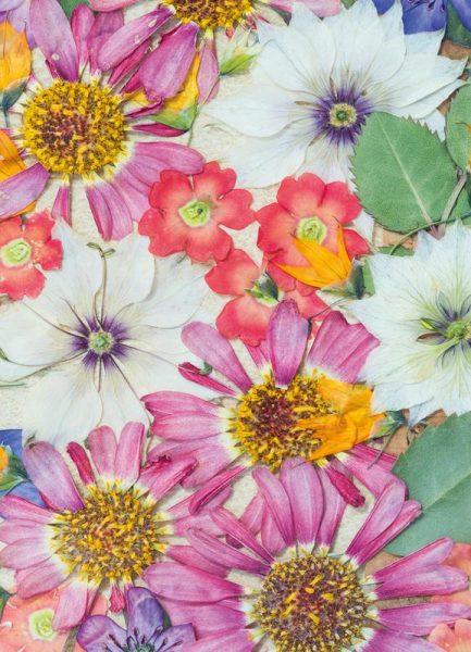 Fragile Flowers Leinwandbild
