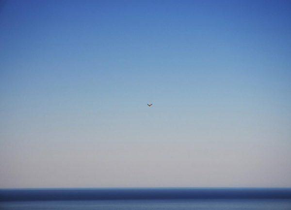 Free Flight Leinwandbild