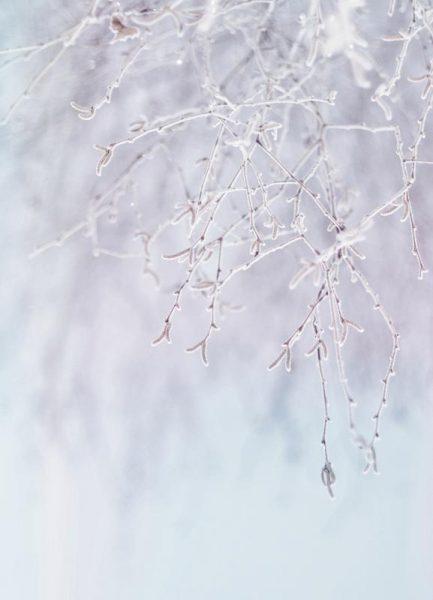 Frozen Twigs Pastel Leinwandbild