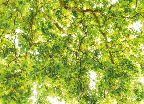 Hazel Tree Leinwandbild