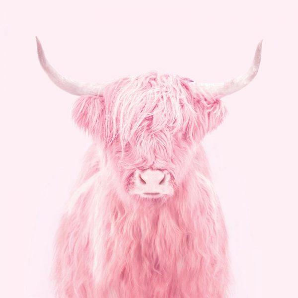 Highland Cow Leinwandbild