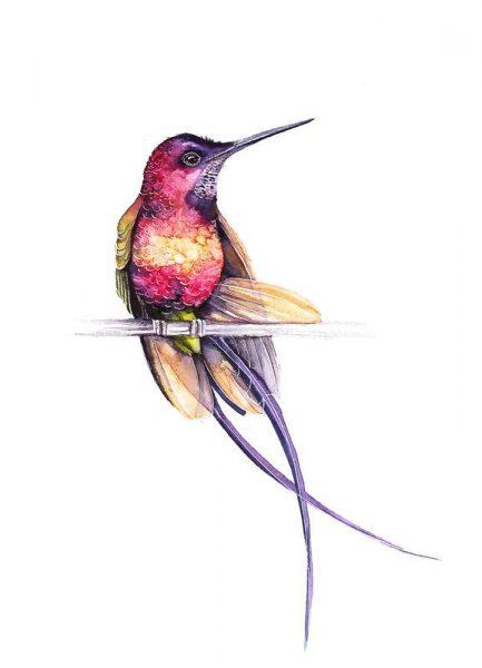 Hummingbird Leinwandbild