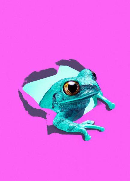 It´s a frog Leinwandbild