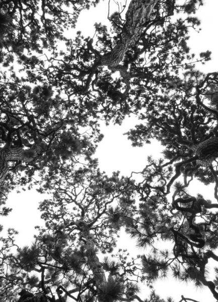 Japanese Garden 4 Leinwandbild