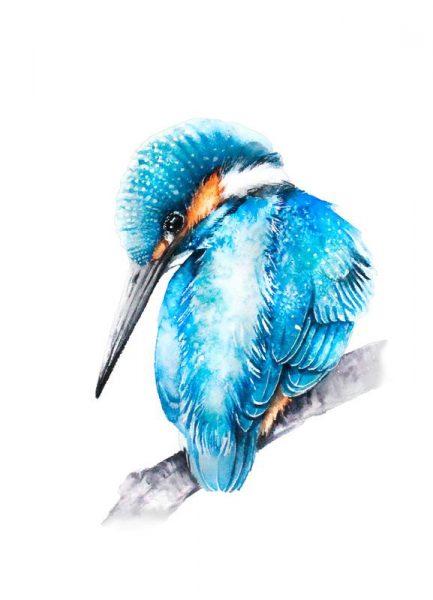 Kingfisher II Leinwandbild