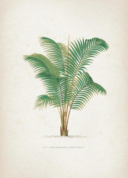 Les Palmiers 1 Kerchove Leinwandbild