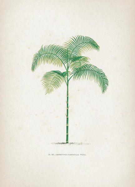 Les Palmiers 13 Kerchove Leinwandbild