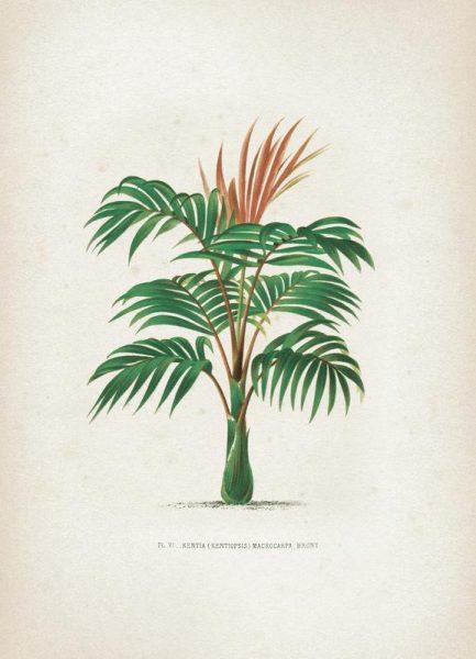 Les Palmiers 6 Kerchove Leinwandbild