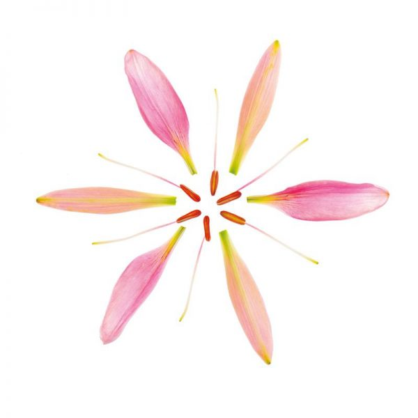 Lilly Flower Leinwandbild