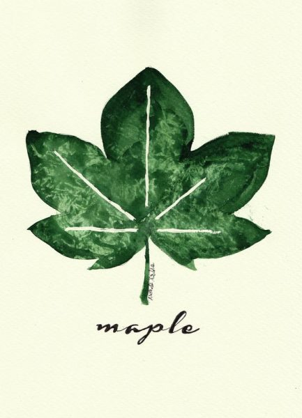 Maple Leinwandbild