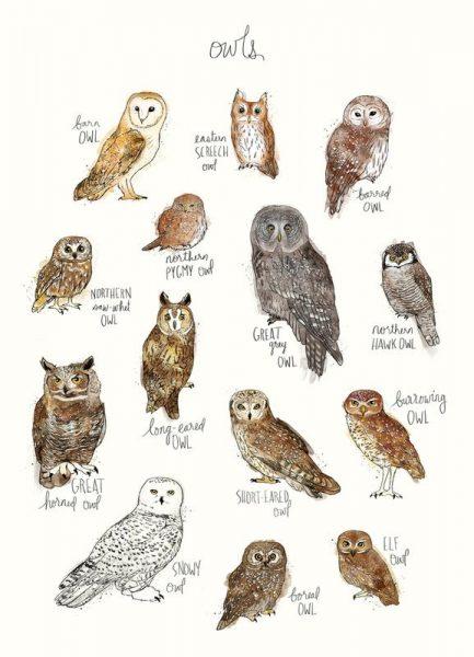Owls Leinwandbild