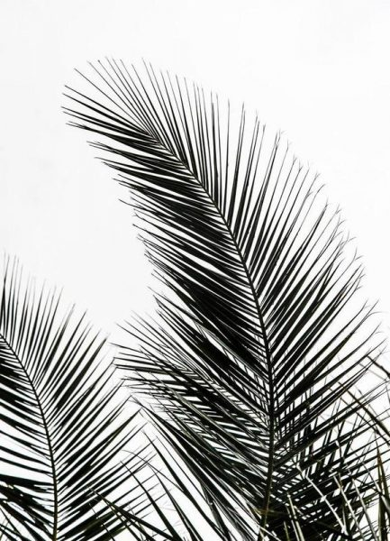 Palm Leaves 1 Leinwandbild