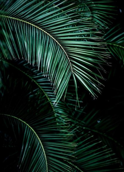 Palm Leaves 9 Leinwandbild