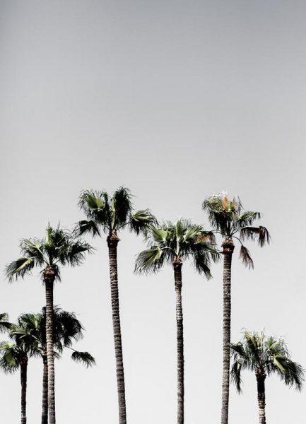 Palm Trees 5 Leinwandbild