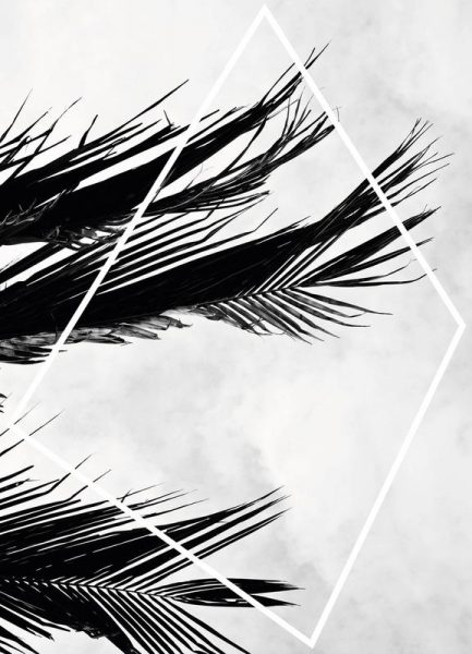 Palmsky Leinwandbild