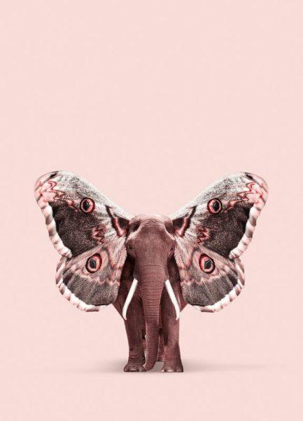 Papillophant Leinwandbild